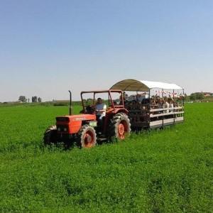 Un pomeriggio in fattoria
