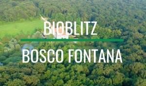 Bosco Fontana, BioBlitz 2017