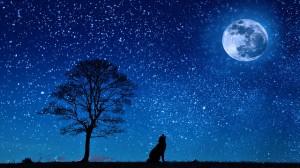 La Notte delle Stelle alle Paludi di Ostiglia