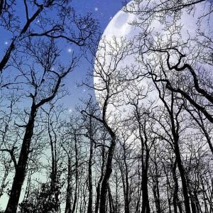 Notte delle stelle nella Foresta Carpaneta